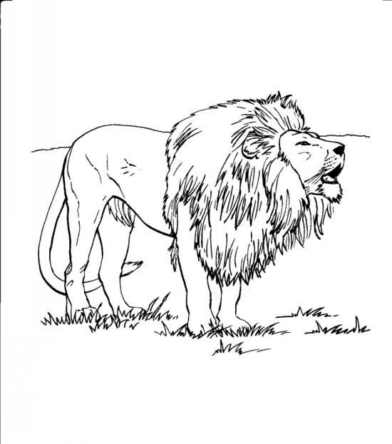 نقاشی حیوانات جنگل برای کودکان
