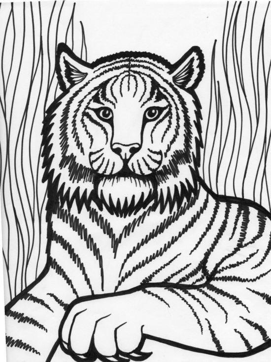 رنگ آمیزی حیوانات جنگل برای کودکان