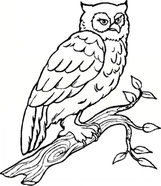 کودکان باهوش و نقاشی حیوانات برای آن ها