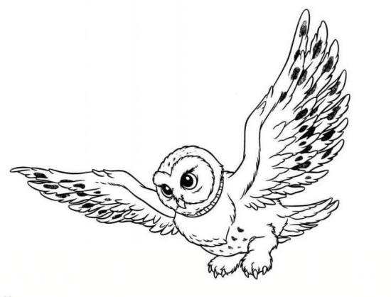 نقاشی جغد در حال پرواز برای کودکان