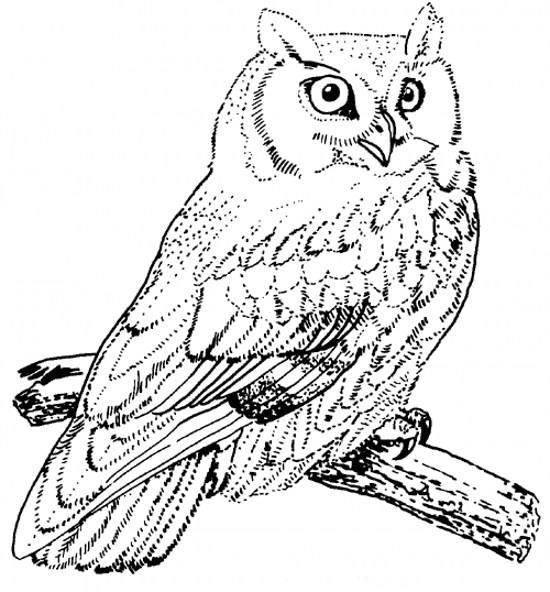 نمونه نقاشی جغدهای مختلف برای کودکان