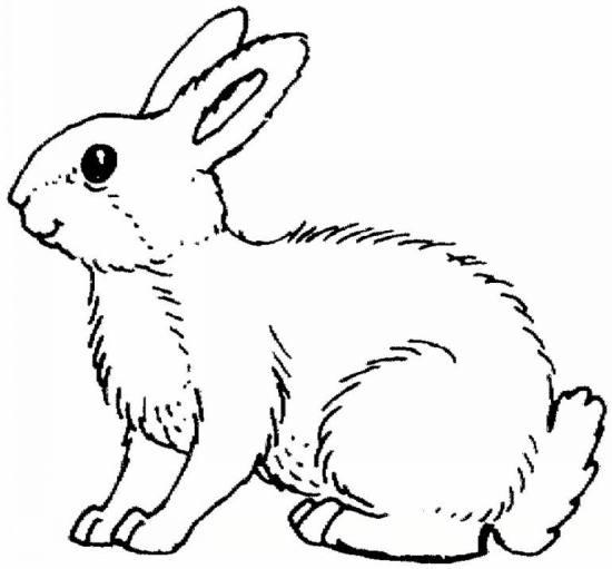 رنگ آمیزی خرگوش های بامزه و با نمک برای کودکان