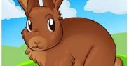 نمونه رنگ آمیزی های زیبای کودکانه از خرگوش