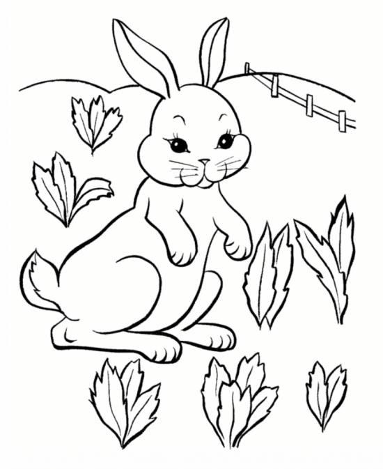 لذت رنگ آمیزی خرگوش و حیوانات علف خوار برای کودکان