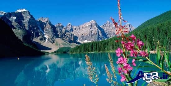 عکس فوق العاده ناب از طبیعت