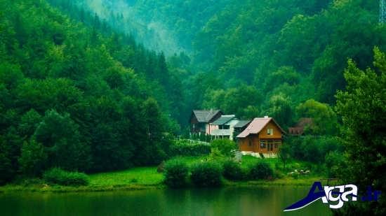 عکس جنگل های زیبا