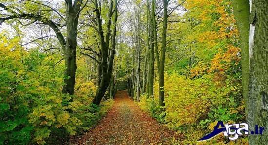 عکس های زیبا ار طبیعت دنیا