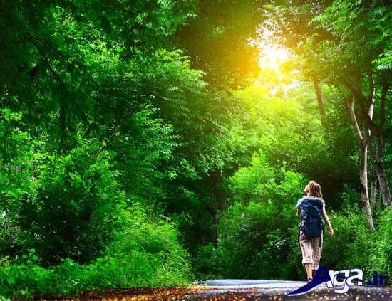 عکس از جنگل های زیبا