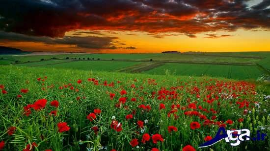 مناظر زیبا از دشت های پر گل