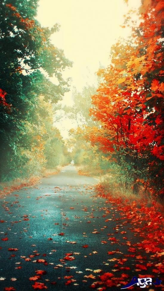 مناظر پاییزی زیبا و جالب