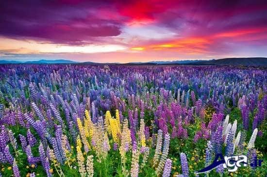 مناظر فوق العاده زیبا از دشت گل و غروب