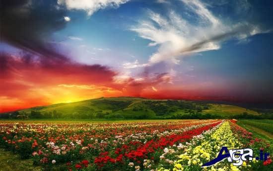 مناظر زیبا از گل های منحصر به فرد