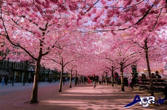 مناظر درختان زیبا و جاده ای رویایی
