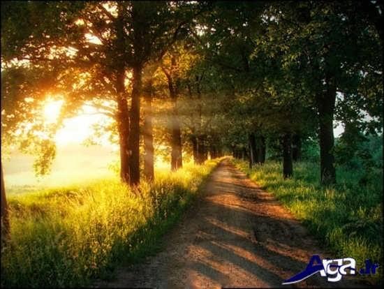 مناظر زیبای جنگل