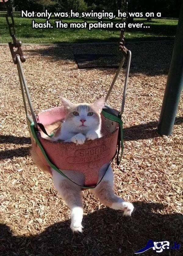 عکس های خنده دار گربه روی تاب