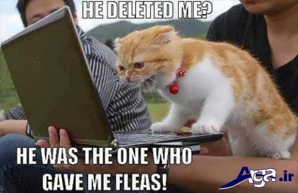 عکس های خنده دار 95 فیسبوکی