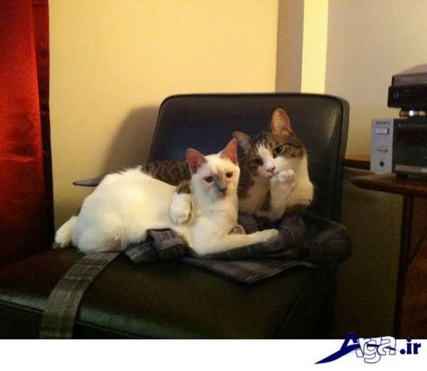 عکس های خنده دار 95 از دو گربه