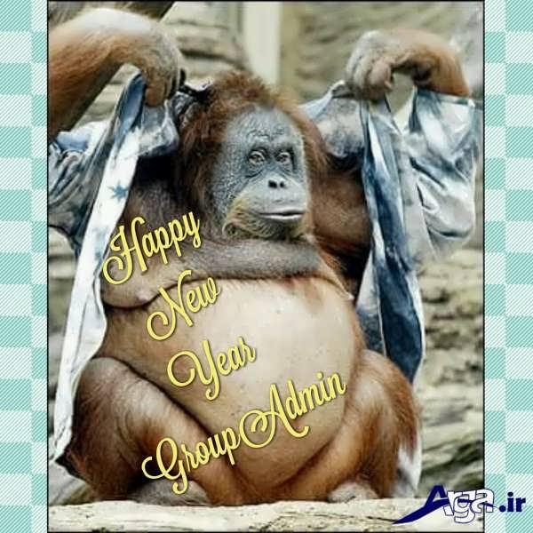 عکس های خنده دار میمون