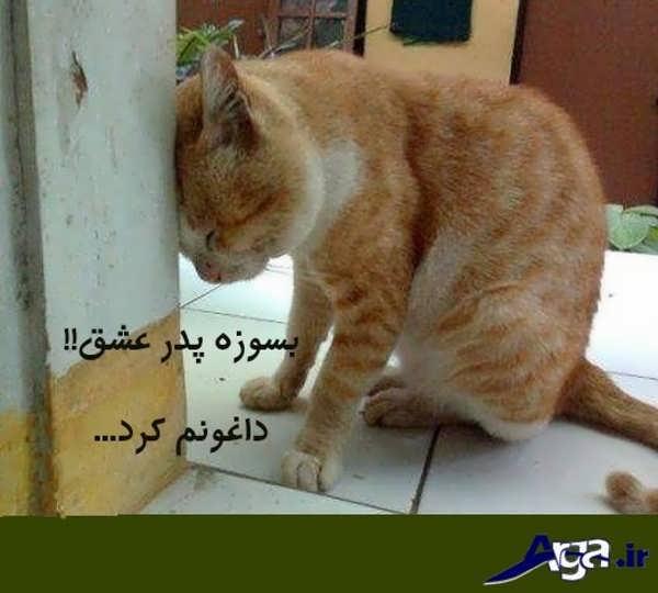عکس های خنده دار گربه عاشق