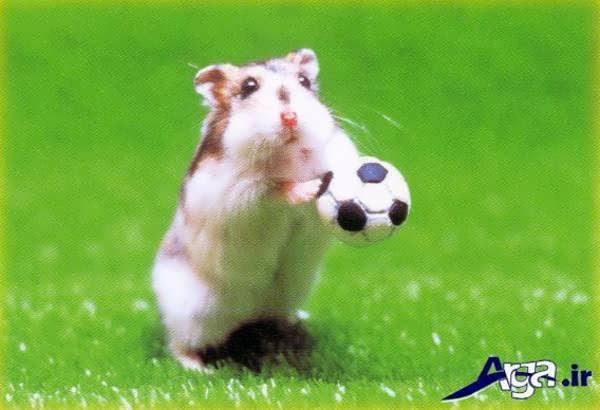 عکس همستر شیطون زیبا