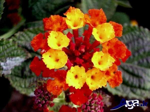 تصاویر گل های زیبا شاهپسند