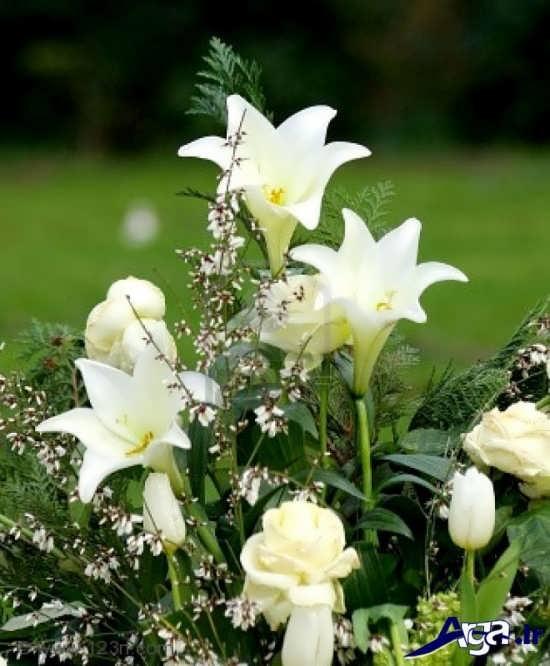 گل های سوسن