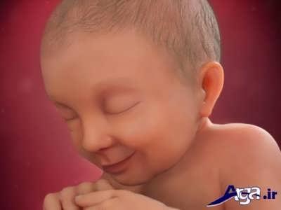 مراحل تشکیل نوزاد و جنین ها