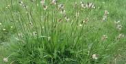 HEALTH BENEFITS OF PLANTAIN (3)