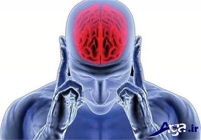 خواص بارهنگ در عملکرد ذهن