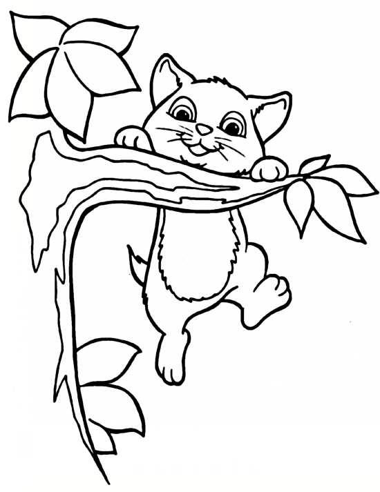 نقاشی گربه و گل