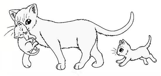 نقاشی زیبا گربه
