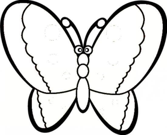پروانه زیبا