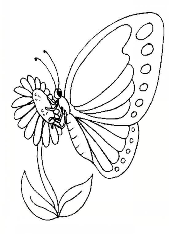 نقاشی گل های زیبا و پروانه های رنگارنگ