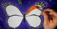 نقاشی پروانه برای کودکان