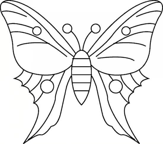 پروانه زیبا و جالب