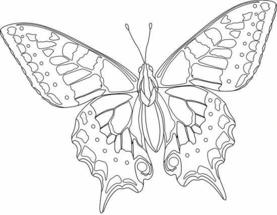 نقاشی های زیبا و جالب پروانه