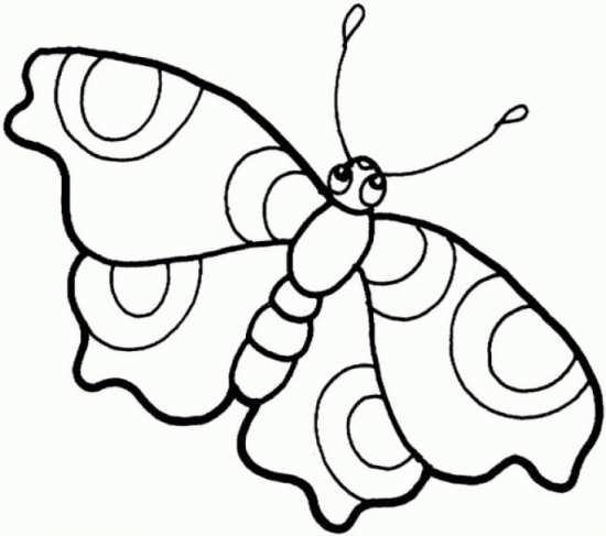 نقاشی های متنوع پروانه های زیبا