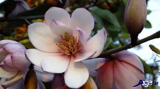 زیباترین گل طبیعی