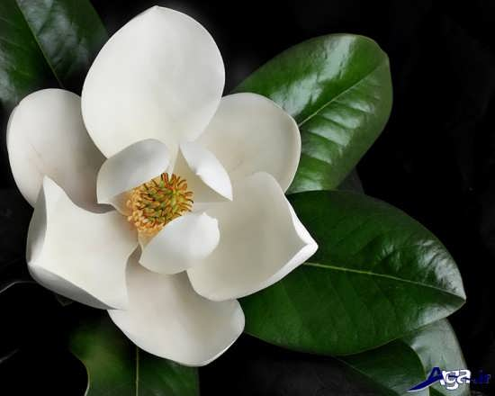 گل زیبا و دیدنی