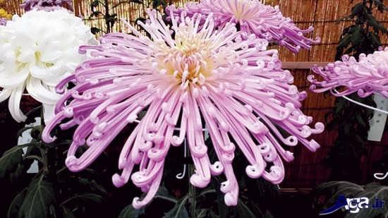 عکی گل های زیبای طبیعی