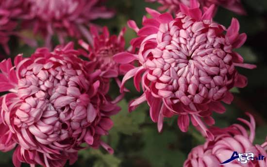 گل های طبیعی و زیبا