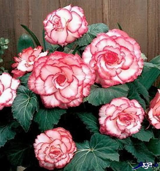 عکس گل های طبیعی زیبا