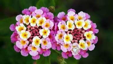 عکس زیباترین گلهای جهان