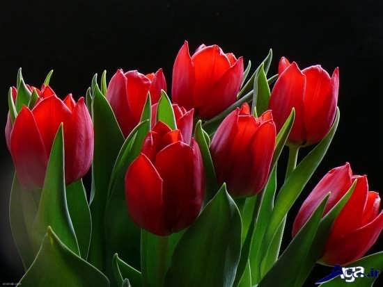 زیباترین گلهای دنیا