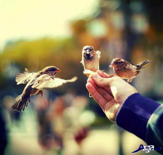 عکس زیبای عارفانه
