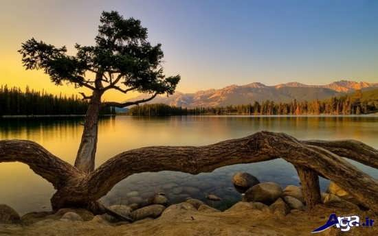 عکس دیدنی و زیبا از طبیعت