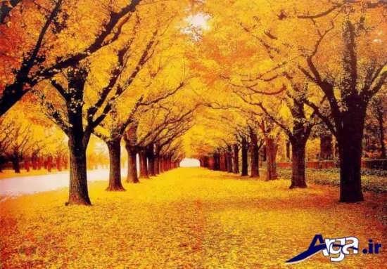 تصاویر زیبا از پاییز و طبیعت