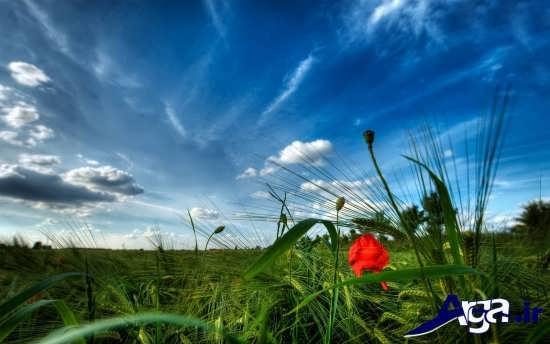 تصاویر زیبا از بهار و طبیعت
