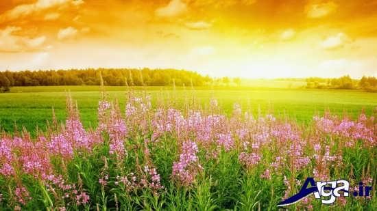 تصاویر زیبا از دشت گل و طبیعت