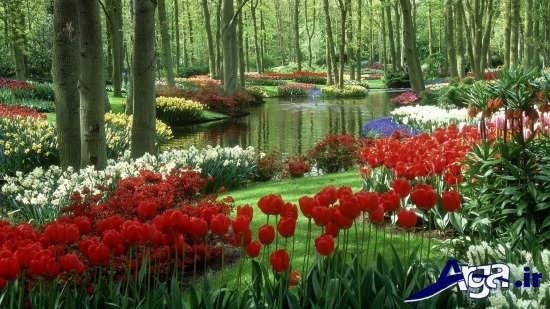 تصاویر زیبا و دلنشین از طبیعت